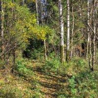 Вход в прекрасный лес :: Нина Кутина