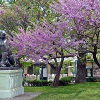 В городском саду цветет церцис. Одесса :: Татьяна Ларионова