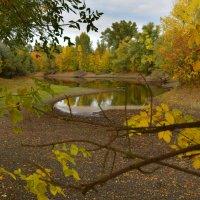 В Осеннем лесу. :: Олег Рыбалко