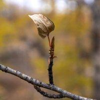 Одинокий листок. :: Юрий Харченко