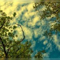 Небо сентябрь :: Анастасия Сосновская