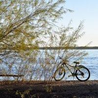 Утренняя прогулка на велосипеде :: Елена Пивоварова