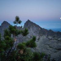 Лунная ночь :: Ник Васильев