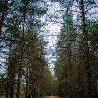 прогулка в лесу :: Ольга (Кошкотень) Медведева