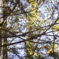 Едва заметна в зарослях лесных :: Нина Кутина