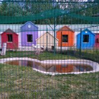 В Белгородском зоопарке (11) :: Алла Григоренко