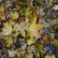 Осенний ковер ... :: Лариса Корж