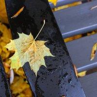 Осенний лист :: dindin
