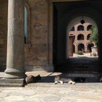 Греция-рай для кошек.. :: ZNatasha -