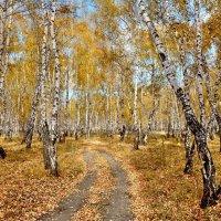 Красота октября :: Mikhail Irtyshskiy
