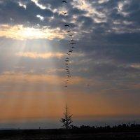 Пеликаны на рассвете :: Евгений Якубсон