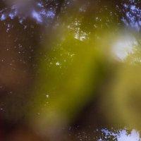 Как растворить в воде листву.... :: Алексей Медведев
