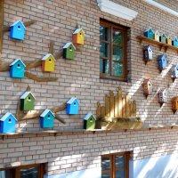 Птичий дом в Костроме :: Надежда