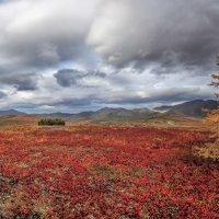 Осень. :: Николай Андреев