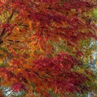 Осенние краски... :: Aquarius - Сергей