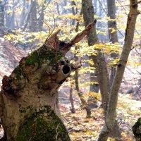 Страж леса :: Ольга Голубева