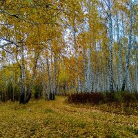 Осень Золотая ... :: Татьяна Котельникова