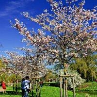 Весна :: Liudmila LLF