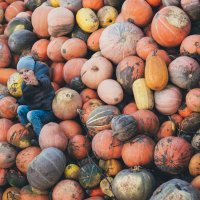 Осень-осень.... :: Olga Schejko
