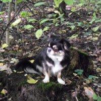 Гуляем в парке, почти в лесу :: Ирина - IrVik