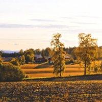 Вдоль скошеных полей. :: Ирэна Мазакина