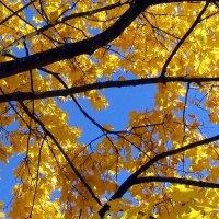 Золотой занавес Осени :: Алла Захарова