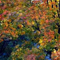 Осенняя листва :: Александр Сапунов
