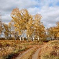 Октябрь золотой :: Mikhail Irtyshskiy