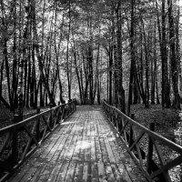 Дорога в осень :: Budarin Alexandr