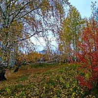 Краски Осени :: Татьяна Котельникова