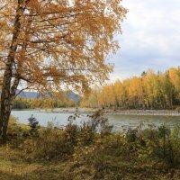 Осень на реке Катунь :: Галина Козлова