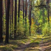 В сосновом лесу -  веселиться.... :: Ирина Приходько