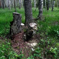 спилили деревья :: Владимир