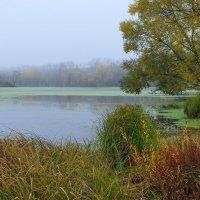 Утро... Осень.. :: Евгений Осипов