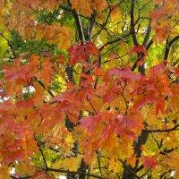 Золотая осень.. :: Зинаида