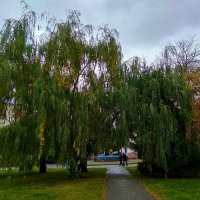 Осень в парке :: Татьяна Котельникова