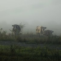 Выплывают из тумана :: Светлана Рябова-Шатунова