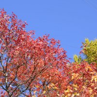 Полыхает октябрь :: ЕСЕНИЯ ♥