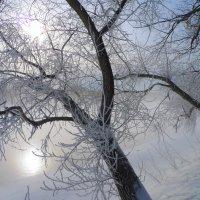 Зимняя симфония :: Alika Demi