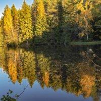 лесной осенний пейзаж :: Владимир Ефимов