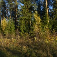 Осенний лес :: Владимир Ефимов