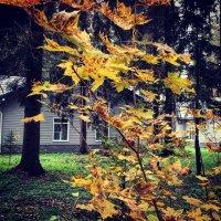 Осень золотая 1 :: Ксения Черных