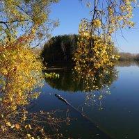 Золото листьев :: Наталия Григорьева