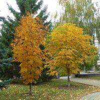 Осень в городе :: Наиля