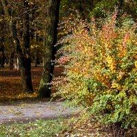 Осеннее разноцветье :: barsuk lesnoi