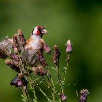 Про семена :: Константин Дронов