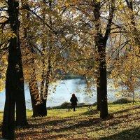 Золотая осень :: ZNatasha -
