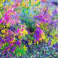 Осень листья расписала в разные цвета... :) :: Любовь К.