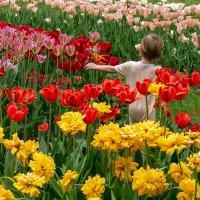 Среди цветов :: Игорь Сикорский