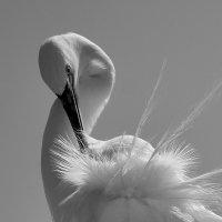 Bird :: Nikolai Savin